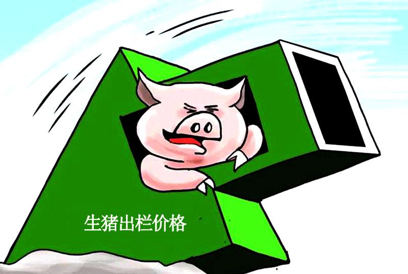 """猪价上涨仅是""""一日游""""猪价走强再次梦碎,猪价复跌到底是咋回事呀?"""