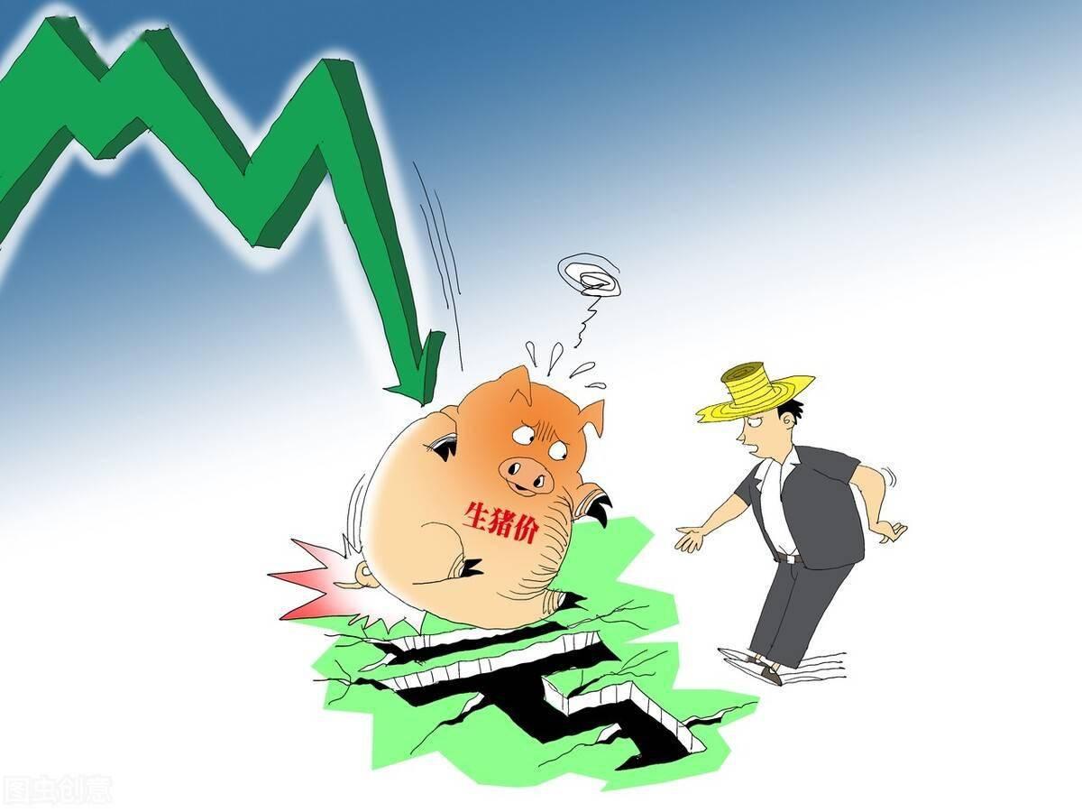 六大期货机构多数看空   生猪为何如此不被看好?
