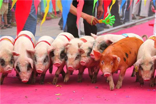 面对猪周期下行、猪肉价格暴跌,如何多措并举促进生猪产业持续健康发展?