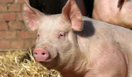 加强生猪高热病疫情防控,四川南充一地猪肉交易市场暂时关闭24小时