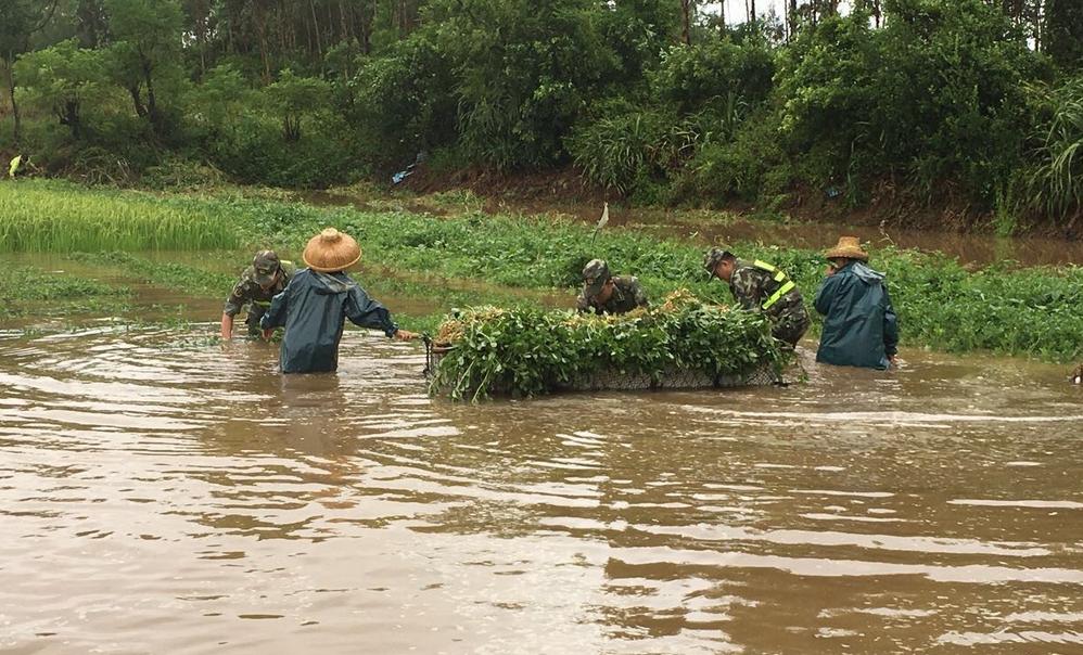 注意!家畜炭疽疫病发生!农业农村部:要进一步做好洪涝灾害灾后动物防疫工作