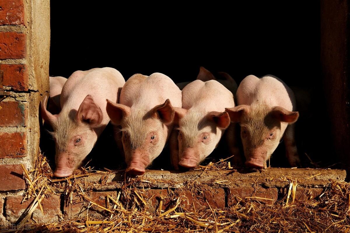 按猪周期的规律,后边养猪方面会出现哪些大事呢?这里就给大家总结下