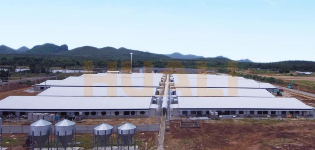 华丽科技助力泰国2400头母猪场  为其提供了全场成套智能养殖设备