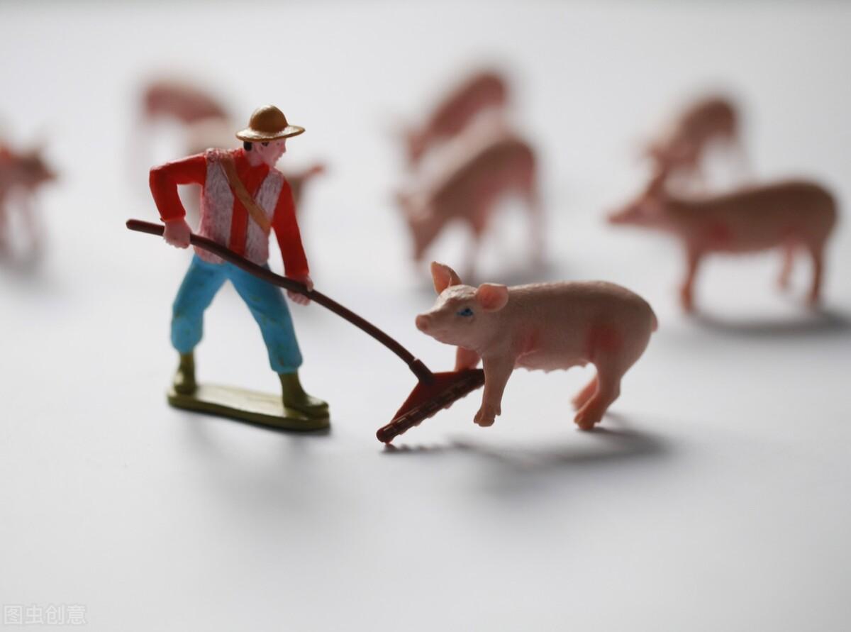 """八月养猪业:猪价""""八连跌"""",养猪亏损加剧,附猪市行情动态和行业动态"""