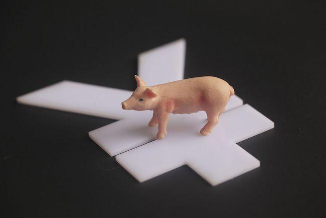 利好VS利空,9月生猪市场价格会怎样?维持在8至9元左右