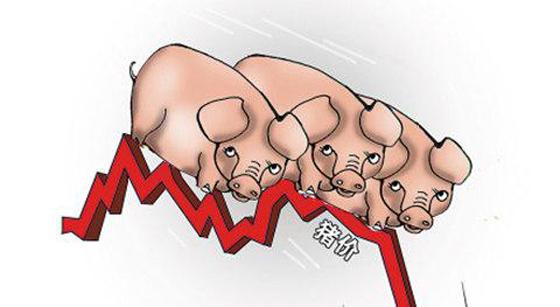 养猪头均亏损可达千元,更惨的是猪价还在跌,饲料价格却又涨了