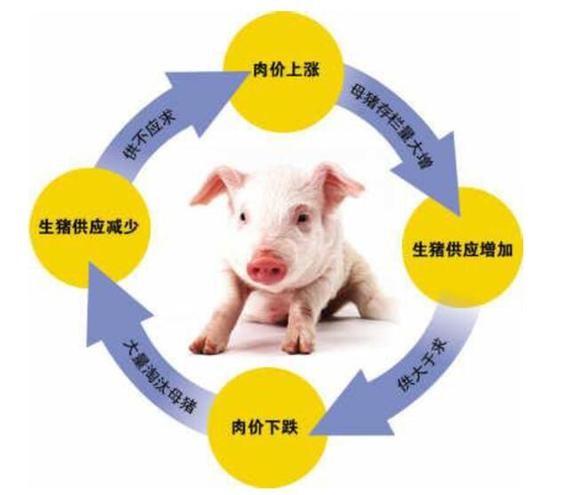 猪价后市何去何从?从猪周期波动规律看当前猪价是否见底