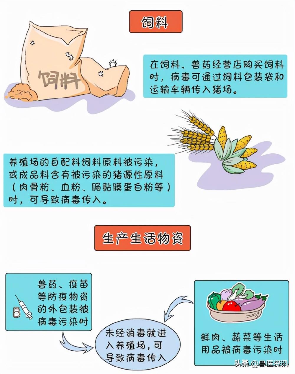 中小养猪场户非洲猪瘟防控八大关键点(图)