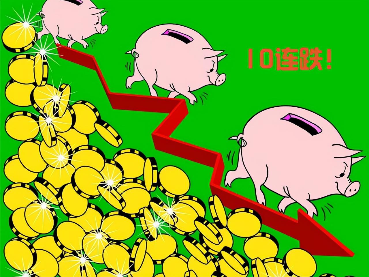 9月7日15公斤仔猪价格:生猪亏得一塌糊涂,仔猪泛滥任人宰割?