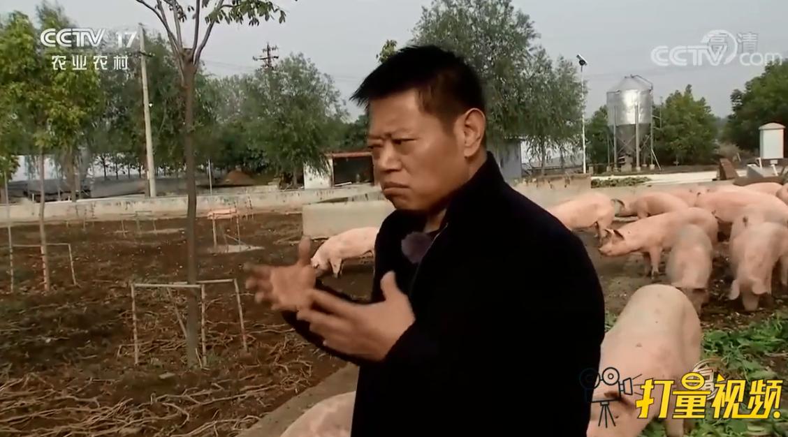 大哥创业养猪,采用独特的新技术,年收入高达3.3亿元!