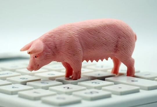 仔猪养了就亏猪农心里苦,3方面原因致仔猪市场冰封换谁也不养?