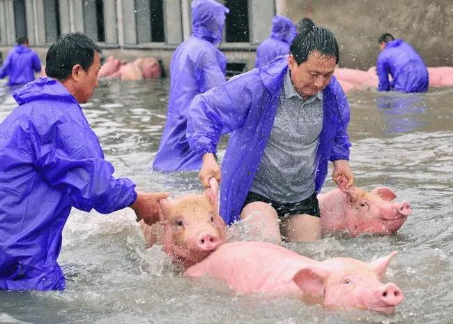 """危险何止5元猪价!更紧急的""""双台风""""自然灾害来势汹汹,你的猪场,准备好了吗......"""