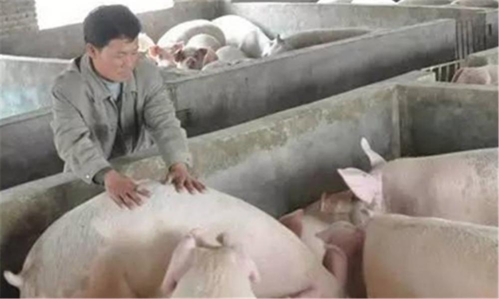 养猪人需要把握怎样的心态,才能赢得更好的市场?