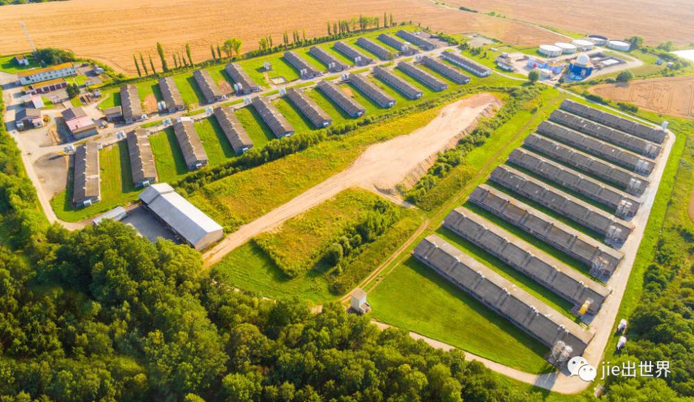 投资达到50亿元!中国建超级养猪场,年产量超过200万头!