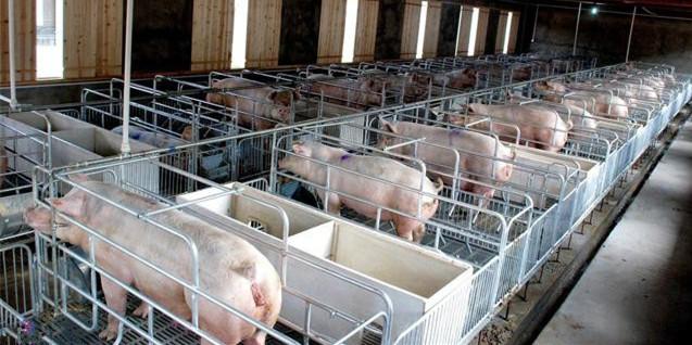 农业农村部:探索生猪产业信息化服务金融模式,加强生产监测和信息引导