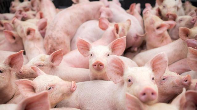 山西五部门:七项政策扶持生猪产业,促进生猪产业持续健康发展