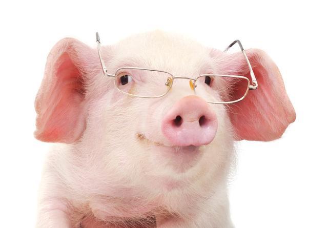 """猪场腹泻混合感染严重不用怕,""""腹泻三联""""三病皆防!"""