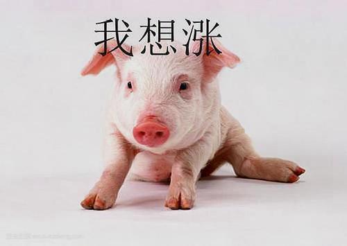 猪价不断下行,猪价到底何时才算见底!上市养殖企业出栏同比仍保持较快增速