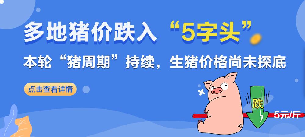 """中秋不涨反跌!多地猪价跌入""""5字头"""" , 本轮""""猪周期""""持续,生猪价格尚未探底"""