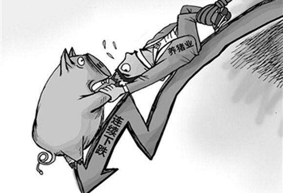 猪价是一降再降,下跌幅度超过60%,年前猪价还能上涨吗?