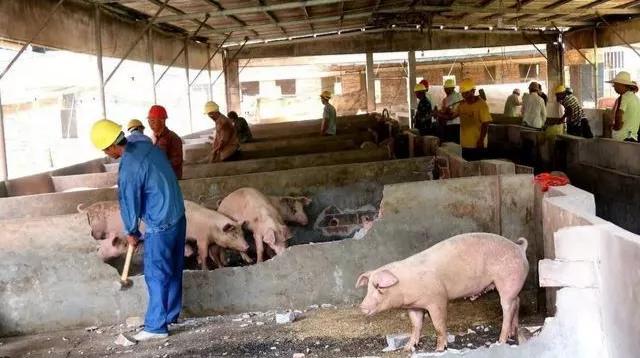 对猪场环保不过关采取零容忍态度