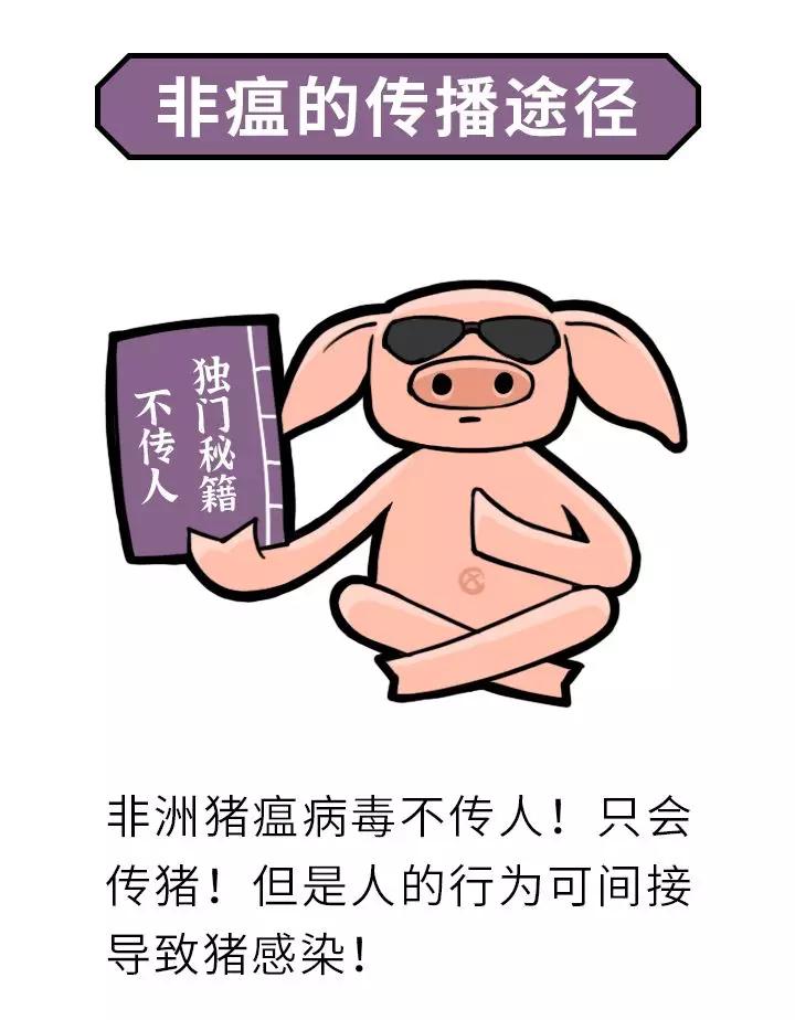 """""""画""""说非瘟,它的杀伤力竟然这么大? 养猪人必看!"""