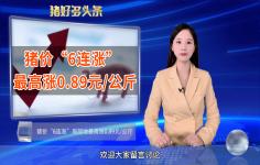 """猪价""""6连涨"""",局地最高涨0.89元/公斤,10月猪价上涨能持续吗?"""