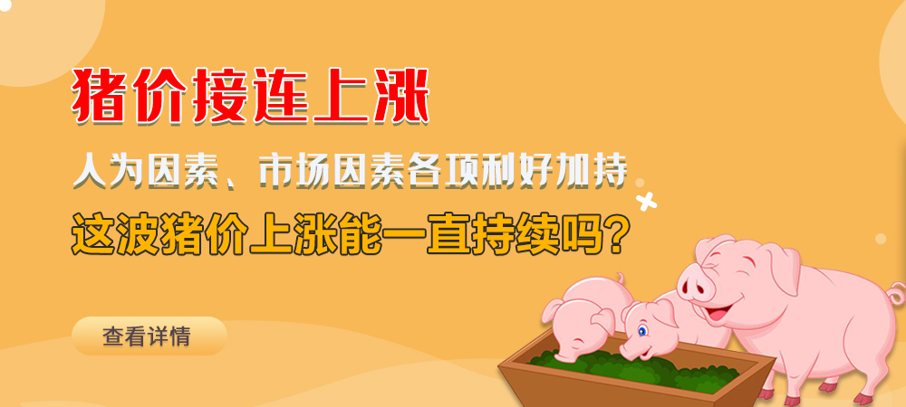 猪价接连上涨!人为因素、市场因素各项利好加持,这波猪价上涨能一直持续吗?