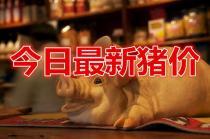 10月16日全国猪价:猪价大涨之后又大跌!发生了啥?反弹结束了?