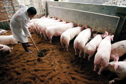 董广林┃那些已经清醒的猪场都在干什么?