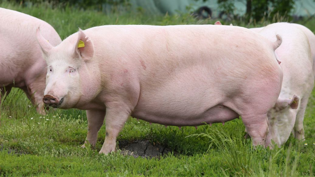 锅底灰有妙用,能止血、消毒、治皮肤病还能防小猪拉稀喔!