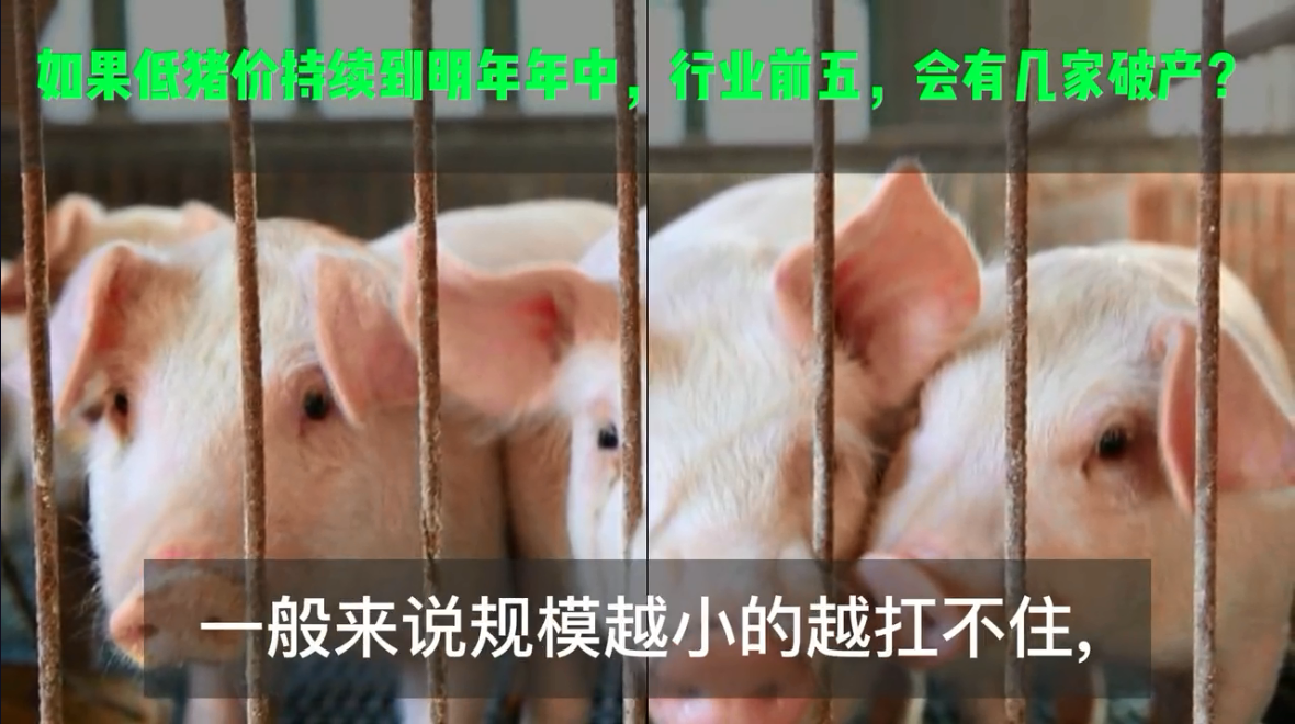 如果低猪价持续到明年年中,行业前五,会有几家破产?