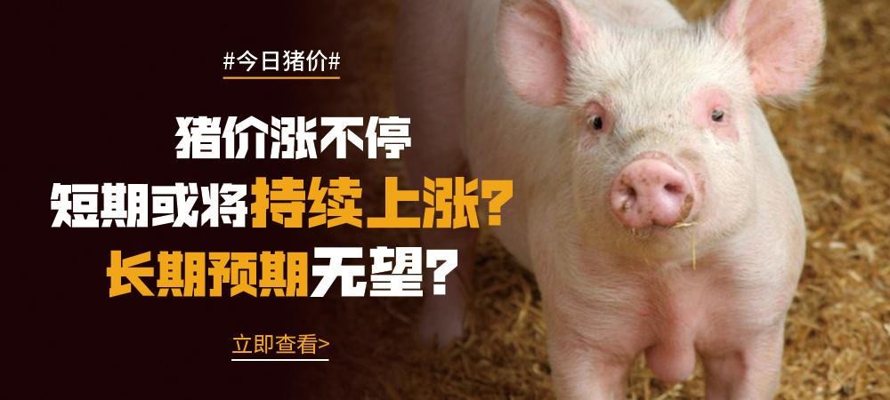 10月21日猪价:猪价涨不停,短期或将持续上涨?长期预期无望?