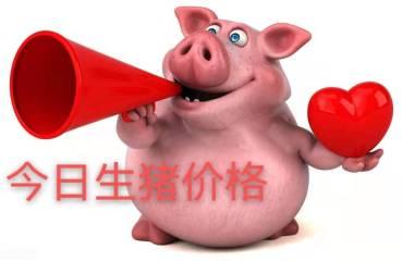 """10月25日猪价:猪价已破""""8"""",冲""""10""""有望?涨多久才能回本?"""
