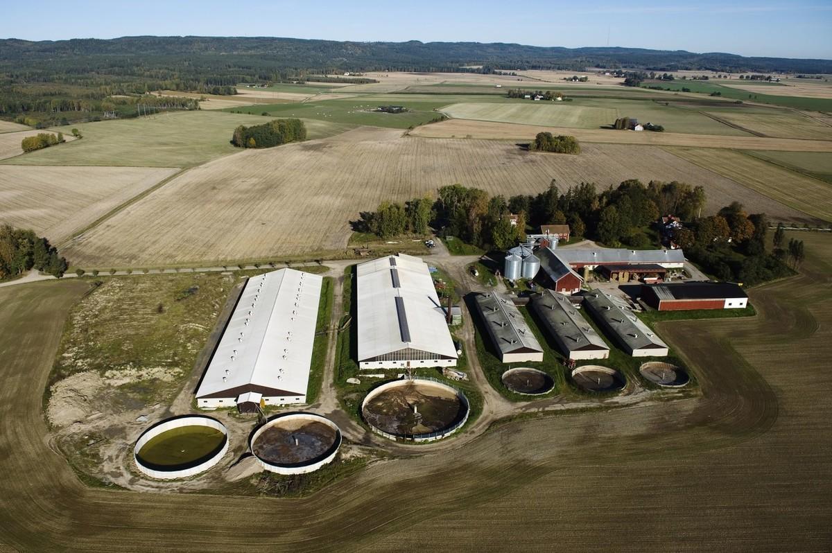 楼房猪场配备空气过滤、除臭系统,靶向通风或是最佳方案