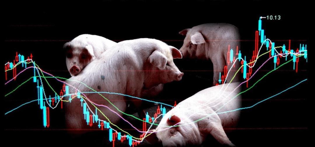 1.03万亿!生猪期货运行175个交易日成交量331.95万手!