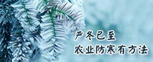 严冬已至 农业防寒有方法